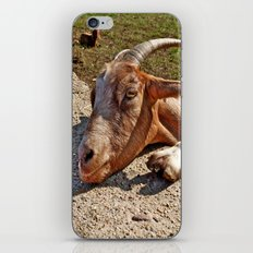 Mr. Goat iPhone & iPod Skin