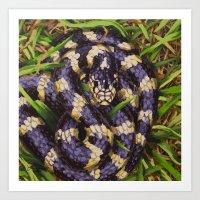 California Kingsnake Art Print