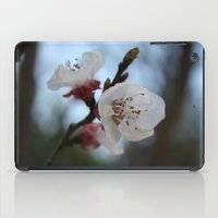 Close Up Apricot Blossom In Pastel Shades iPad Case