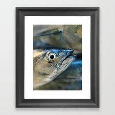 Big eye, tuna, fish, still life, photo, fine art, print, nature, sea, fishing, detail, blue Framed Art Print