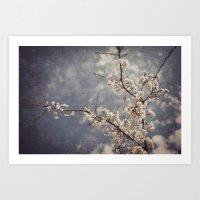 White Blossom Art Print