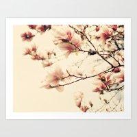 Magnolia skies Art Print