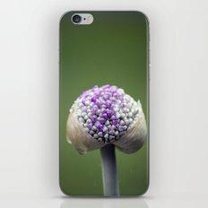 Starting Allium iPhone & iPod Skin