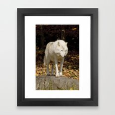 Peering Framed Art Print