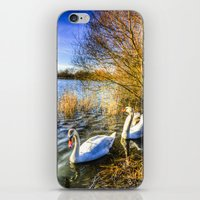 The Peaceful Watching Sw… iPhone & iPod Skin