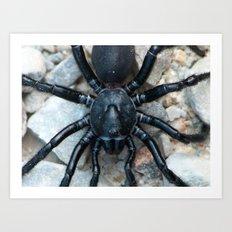 young tarantula Art Print
