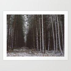 Winter Pine trees. Art Print