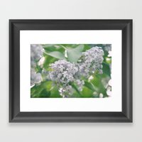 Lilacs Framed Art Print
