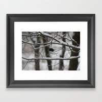Junco Framed Art Print