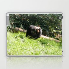 Sun Bear Profile Laptop & iPad Skin