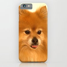Cute Pomeranian dog iPhone 6s Slim Case