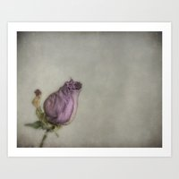 Single Dry Rose Art Print
