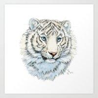 Young White Tiger  Art Print