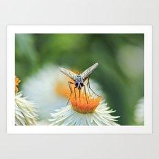 Bug on a flower Art Print