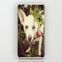 Looking Lobo iPhone & iPod Skin