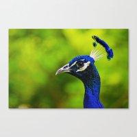 Pretty as a Peacock I Canvas Print