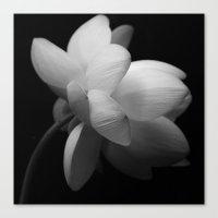 Black & While Lotus II Canvas Print