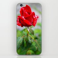 Rose With Raindrops  iPhone & iPod Skin