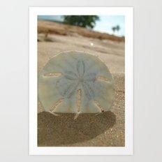 Sandy Dollar Art Print