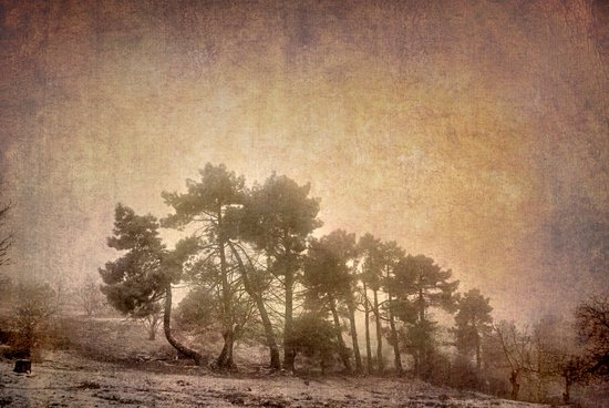 the curved tree Art Print