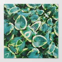 50 Shades of Green (7) Canvas Print