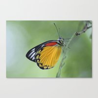 Butterfly.. Canvas Print