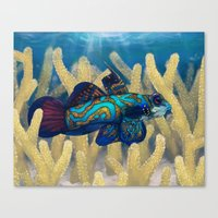 Mandarinfish Canvas Print