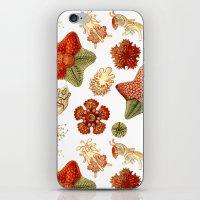 Sea Stars And Star Fish iPhone & iPod Skin