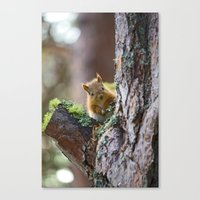 Baby Red Squirrel  Canvas Print