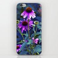Purple Coneflowers  iPhone & iPod Skin