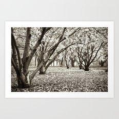 Magnolias in Black & White Art Print