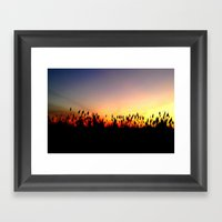 Sunset Reeds Framed Art Print