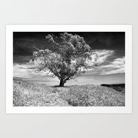 The Noble Gum Tree Art Print