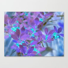 Teal berries with purple leaves Canvas Print
