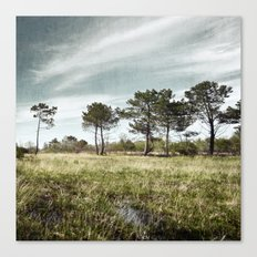 Almost a Forest Canvas Print