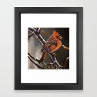 Northern Cardinal Male Framed Art Print
