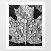 Raindrops On Fallen Leaf Art Print