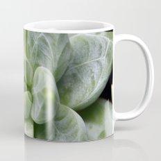 Succulent Pachyphytum Mug