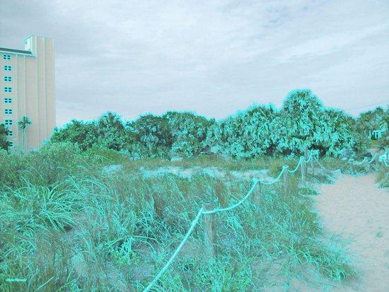 Siesta Keys Beach Trail in Greenish Edges Art Print
