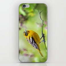 Spring Oriole iPhone & iPod Skin