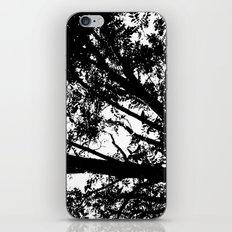 Pecan Tree Silhouette iPhone & iPod Skin