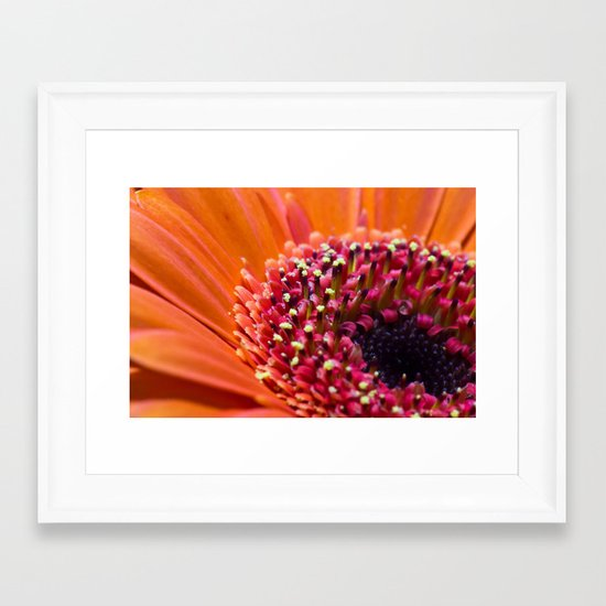 Orange Germini. Framed Art Print