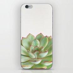 Green Succulent iPhone & iPod Skin