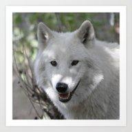Art Print featuring Wolf20150305 by Jamfoto