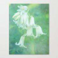 White Bluebell Canvas Print