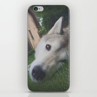 Husky 1 iPhone & iPod Skin