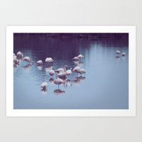 Flamingo Reflection Art Print