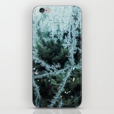 Seasonal window dressing iPhone & iPod Skin