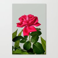 Red Rose Wilting Canvas Print