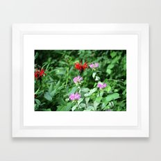 Bee Balm Framed Art Print